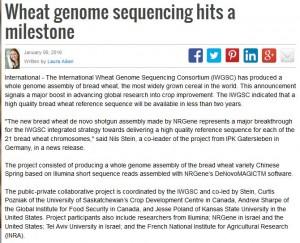 wheat genome milestone